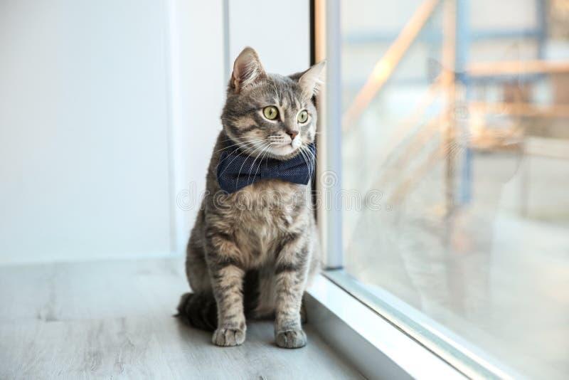 Gato divertido lindo que se sienta en travesaño de la ventana fotografía de archivo libre de regalías
