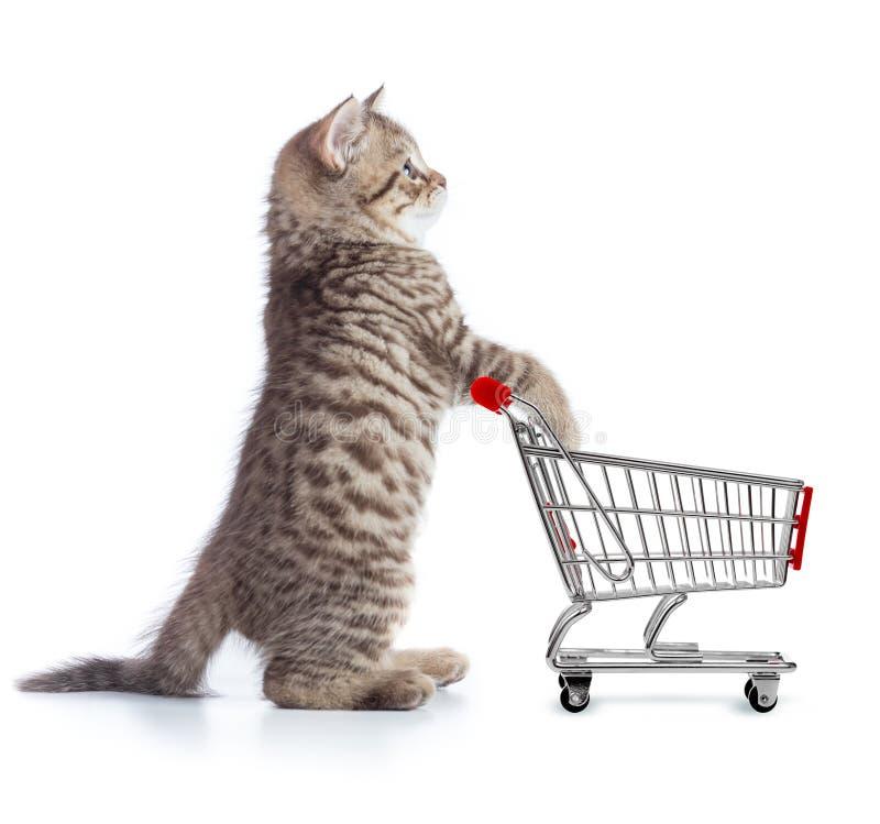 Gato divertido que se coloca con vista lateral del carro de la compra foto de archivo libre de regalías