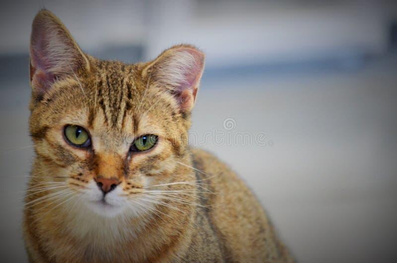Gato do abrigo fotografia de stock royalty free