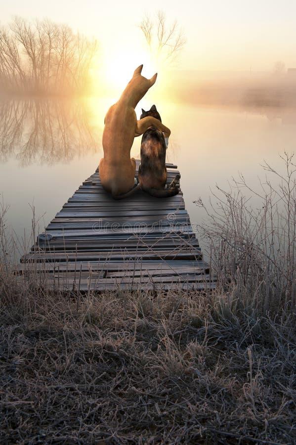 Gato do amor do cão, por do sol de observação
