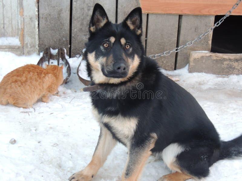 Gato do ANC do cão fotos de stock