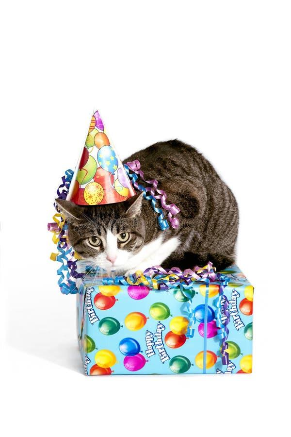 Gato do aniversário fotografia de stock