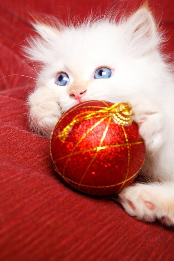 Gato do bebê com decoração do Natal fotos de stock
