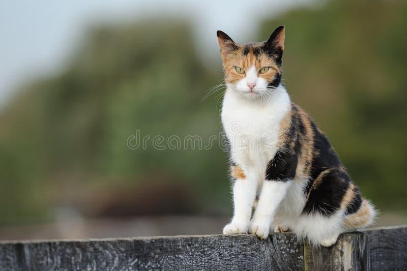 Gato do celeiro fotos de stock royalty free