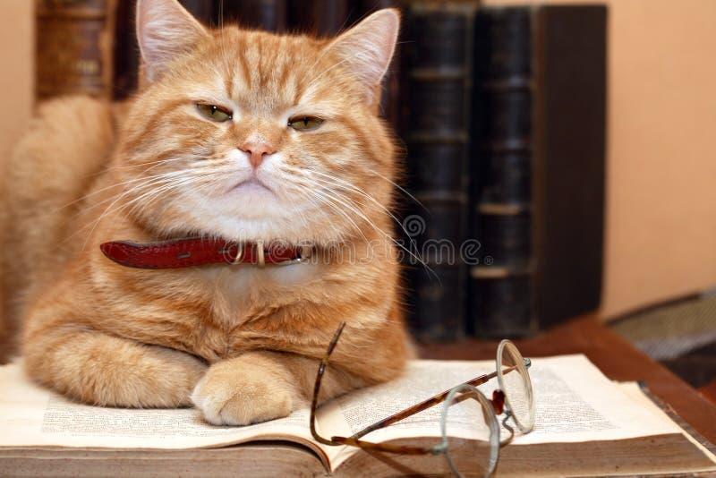 Gato do cientista imagens de stock