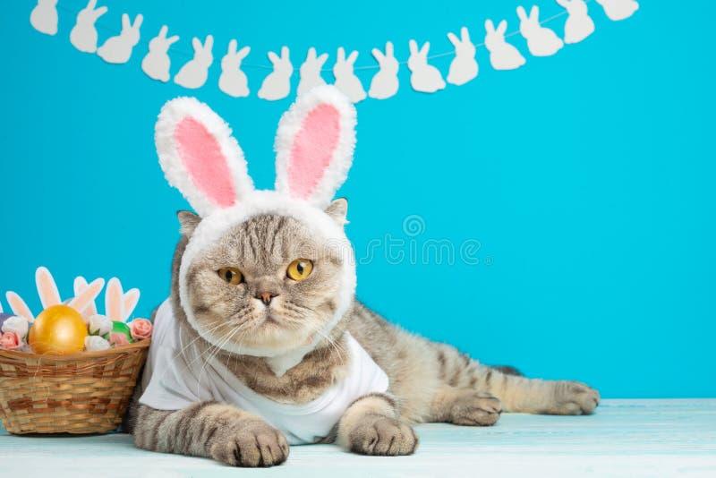 Gato do coelhinho da Páscoa, bonitos engraçados com orelhas e ovos da páscoa Fundo e composição da Páscoa fotografia de stock royalty free