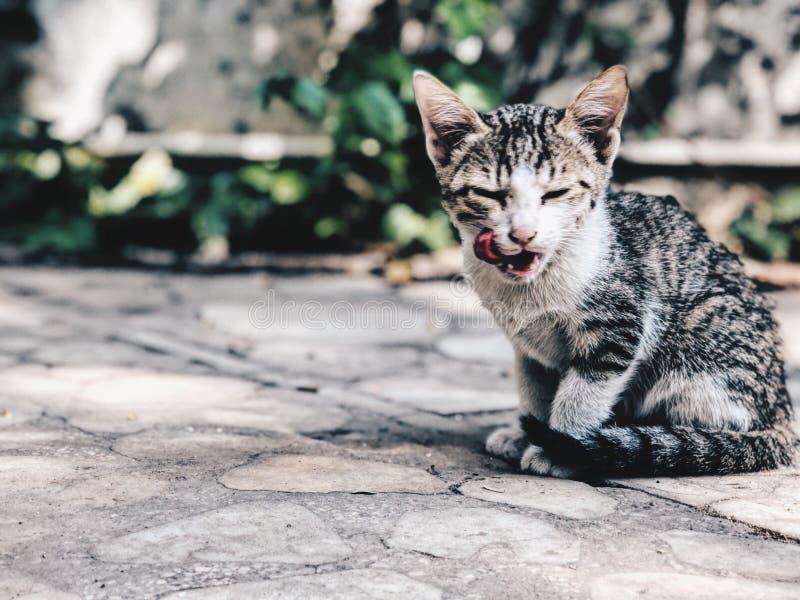 gato do cutie foto de stock royalty free