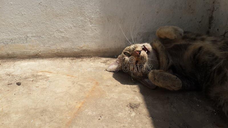 Gato do divertimento fotografia de stock