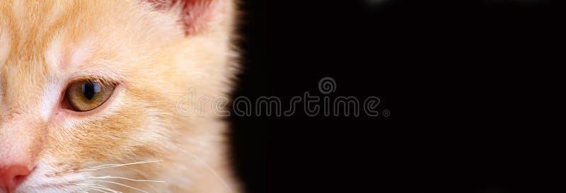 Gato do gatinho do gengibre fotografia de stock