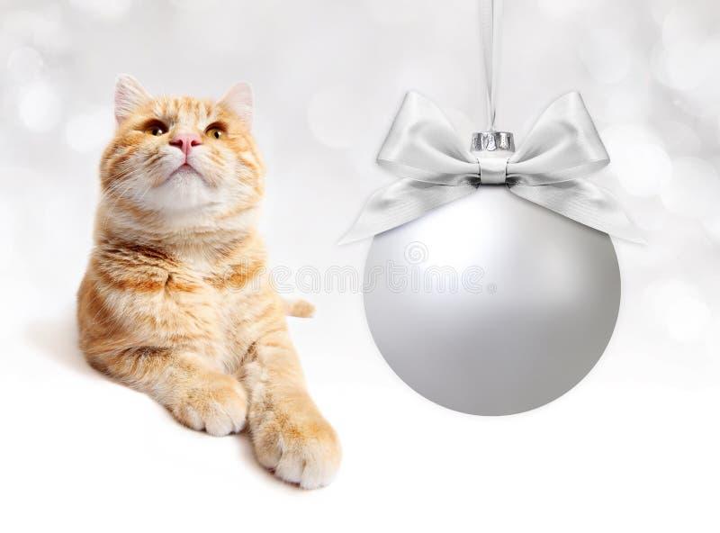 Gato do gengibre com curva de prata da fita do whit da bola do Natal em b branco fotografia de stock royalty free