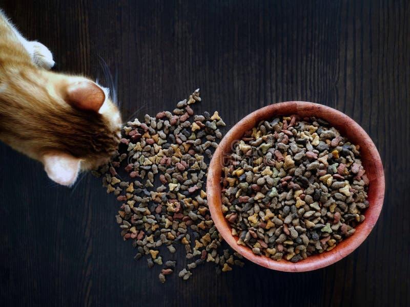 Gato do gengibre que come a comida de gato seca fotos de stock royalty free