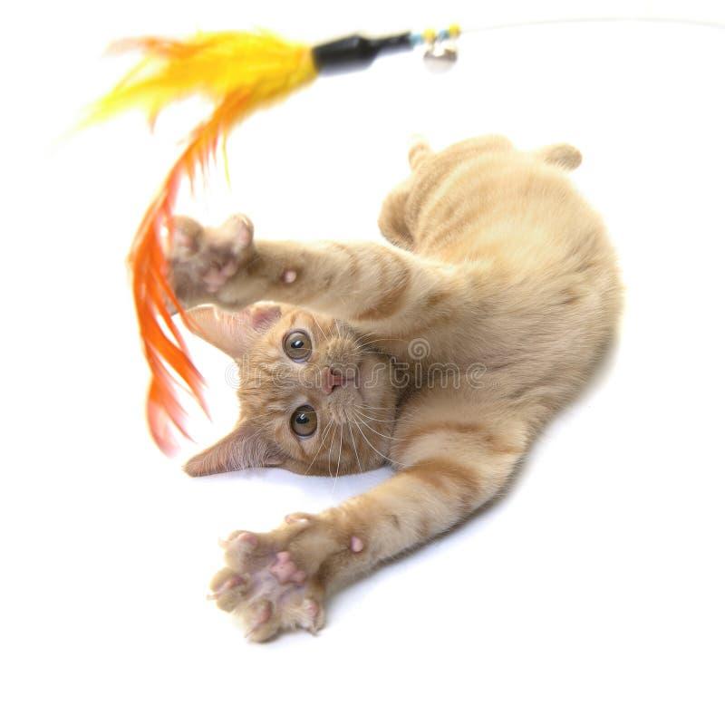 Gato do gengibre vermelho que joga com um brinquedo da pena imagens de stock