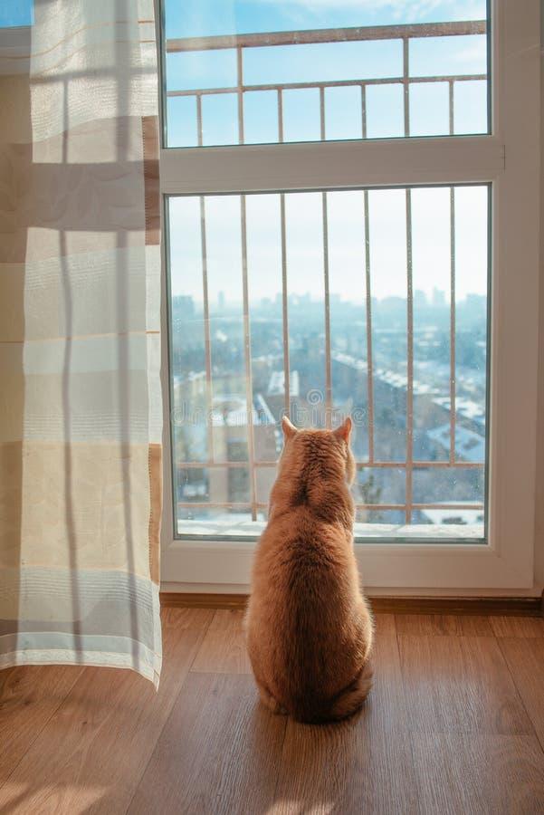 Gato do gengibre vermelho que olha durante todo a janela fora à arquitetura da cidade no dia ensolarado imagens de stock