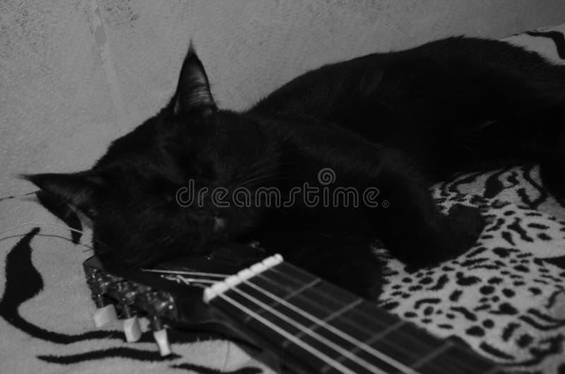 Gato do Grayscale imagem de stock