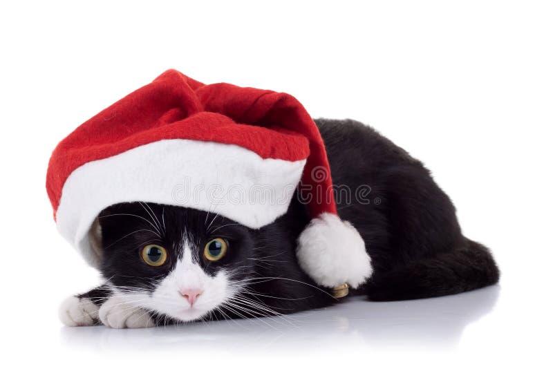 Gato do Natal foto de stock royalty free