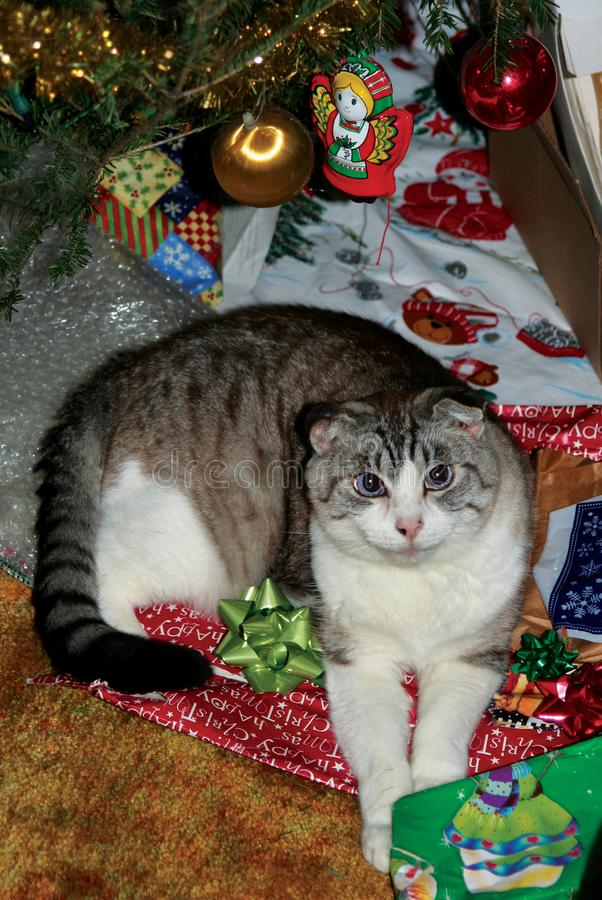 Gato do Natal entre festividades fotografia de stock royalty free