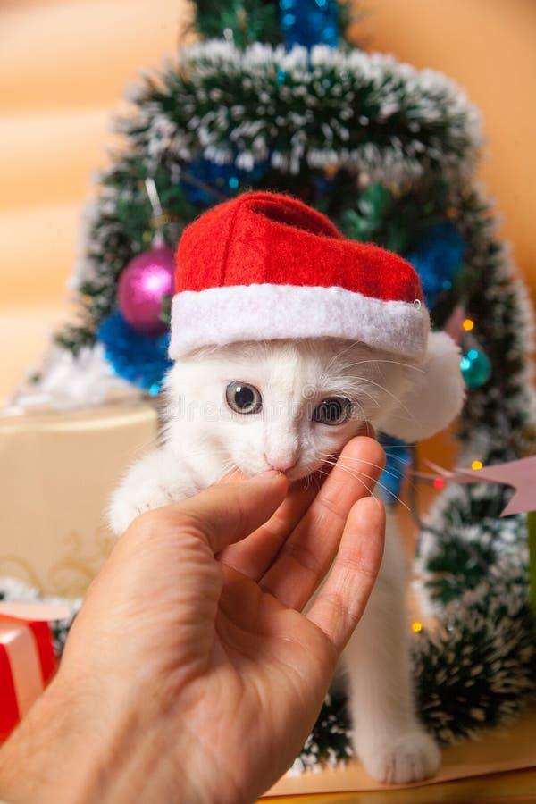 Gato do Natal no chapéu vermelho do ` s de Santa perto do Natal fotografia de stock royalty free