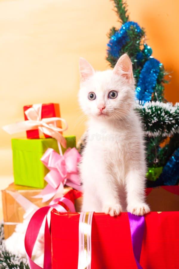 Gato do Natal no chapéu vermelho do ` s de Santa perto da árvore de Natal fotografia de stock royalty free