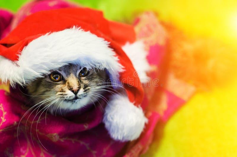 Gato do Natal no chap?u vermelho de Santa Claus imagem de stock royalty free