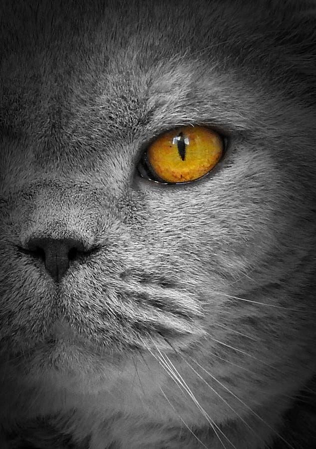 Gato do olho do espião da fiscalização fotografia de stock