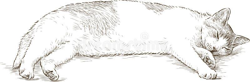 Gato do sono ilustração royalty free