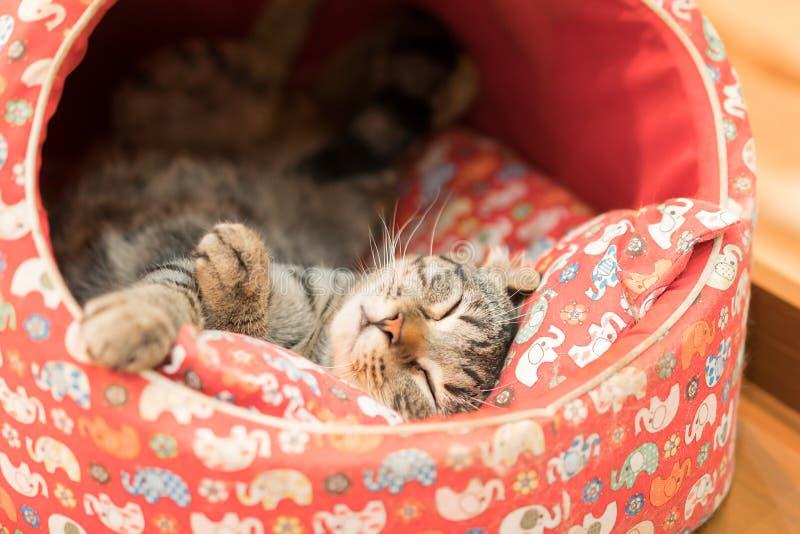 Gato do sono imagem de stock