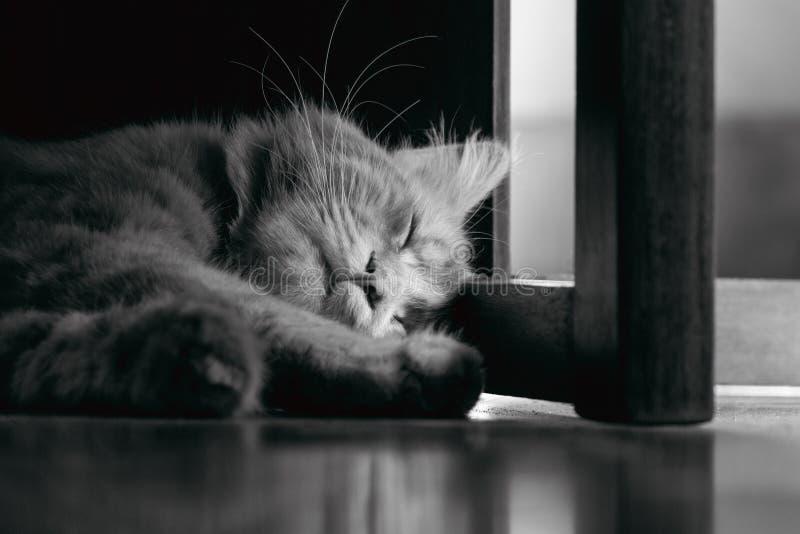 Gato do sono em casa imagens de stock