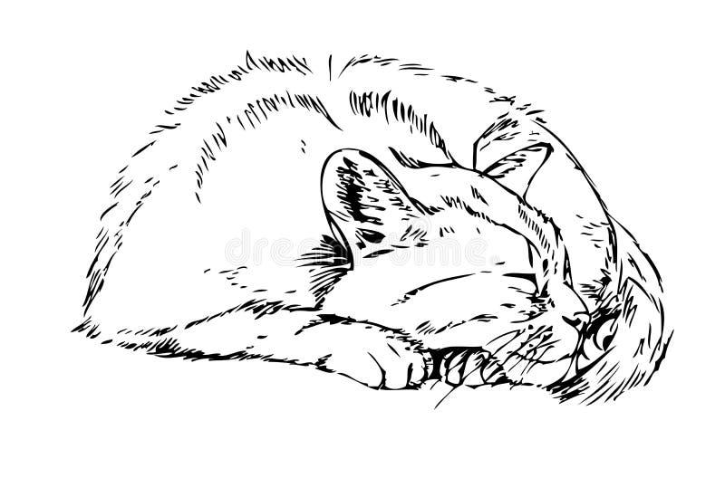 Gato do sono esboço ilustração stock