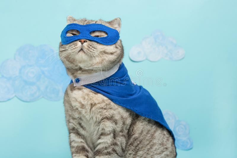 gato do super-herói, Whiskas escocês com um casaco e uma máscara azuis O conceito de um super-herói, gato super, líder imagem de stock royalty free