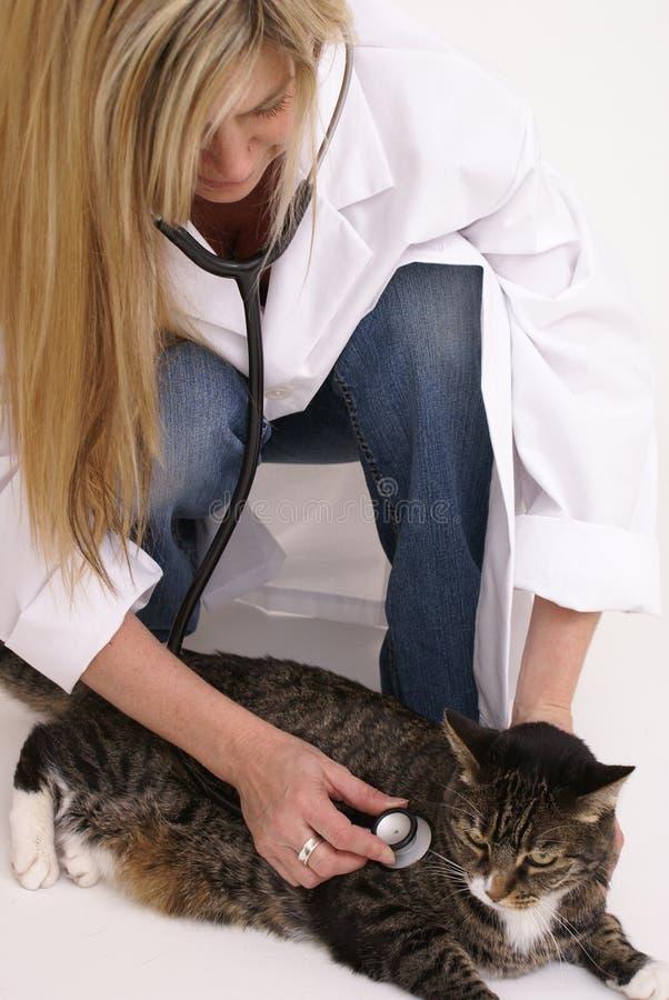 Gato do veterinário e de tabby fotos de stock royalty free