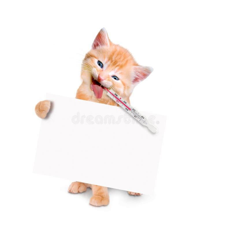 Gato doente com bloco e termômetro de gelo e bandeira isolada imagem de stock royalty free