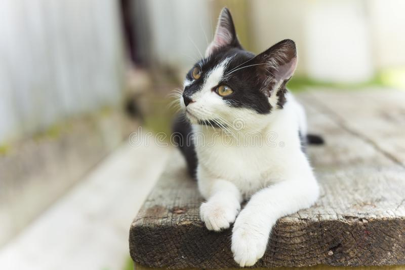 Gato doméstico lindo fotografía de archivo