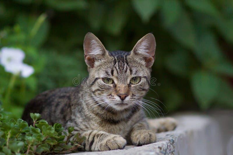 Gato doméstico lindo imagen de archivo