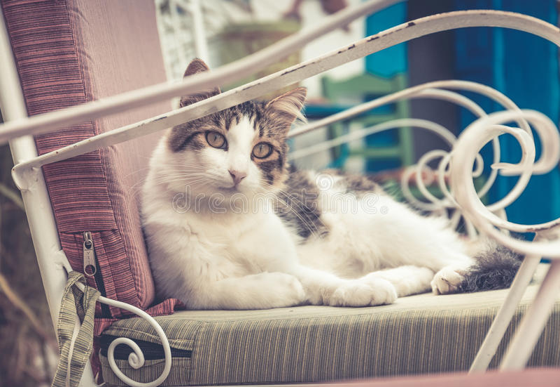 Gato doméstico lindo foto de archivo libre de regalías