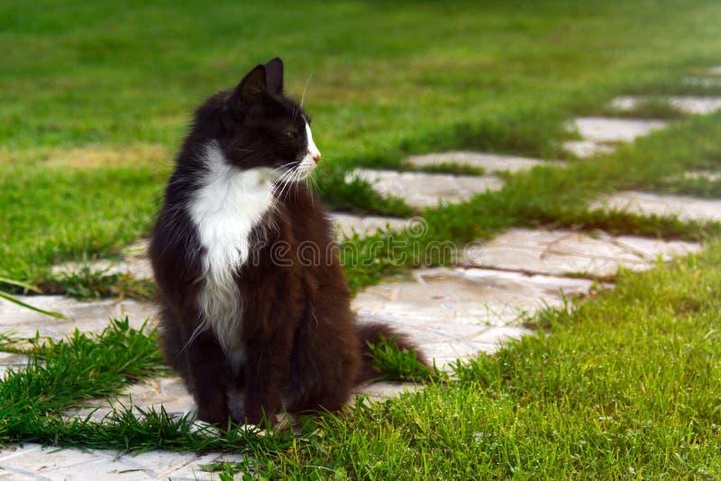 Gato doméstico macio imagens de stock