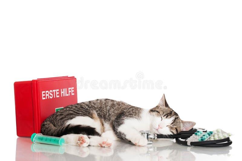 Gato doméstico novo fotografia de stock