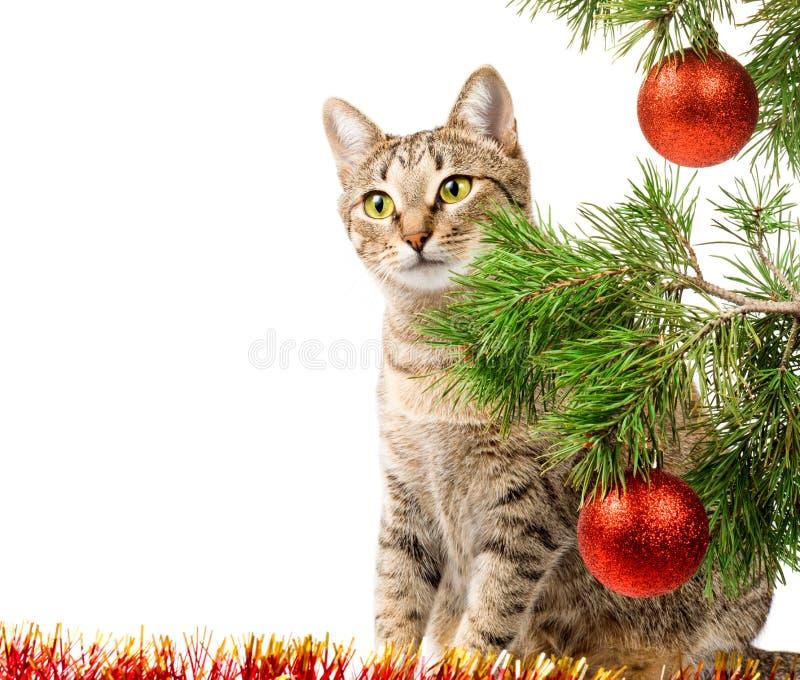 Gato doméstico y árbol de navidad fotografía de archivo