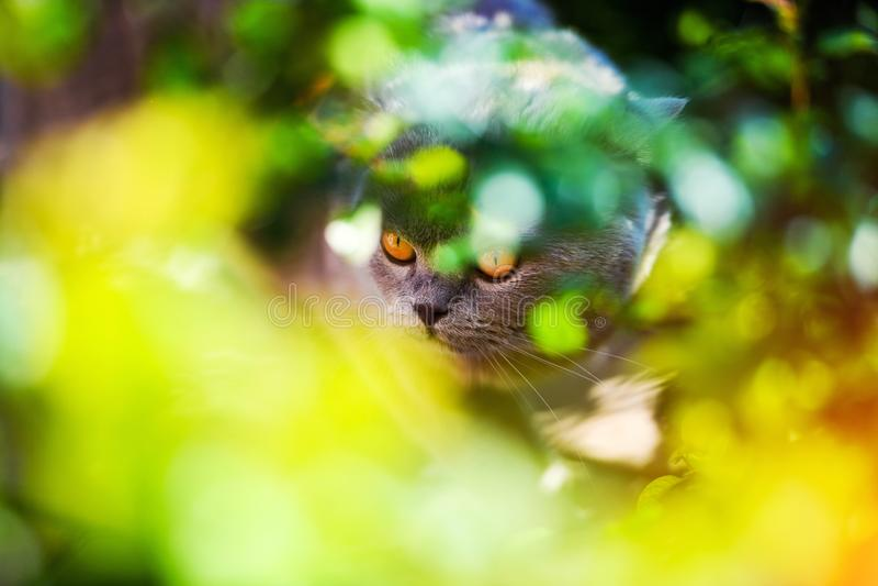 Gato dulce entre las hojas fotografía de archivo libre de regalías