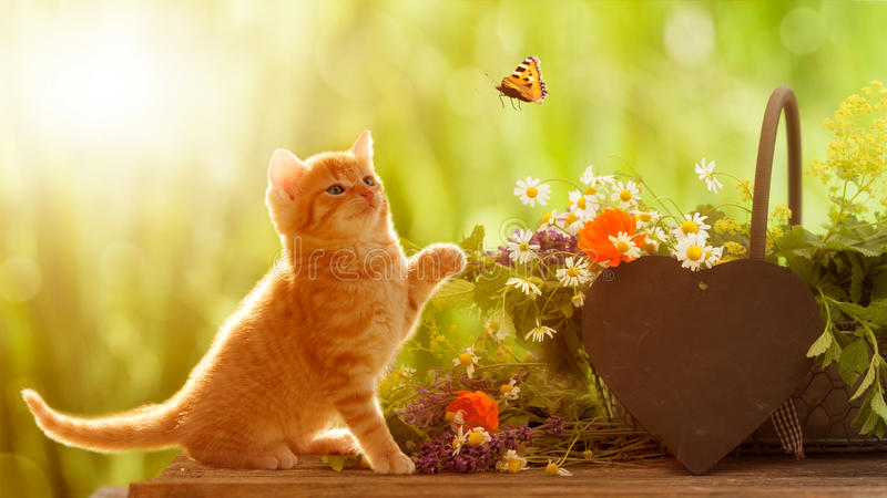 Gato e borboleta novos com ervas medicinais fotografia de stock