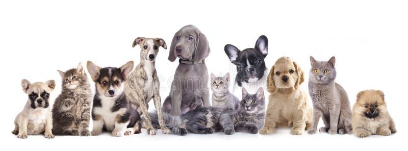 Gato e cão do grupo