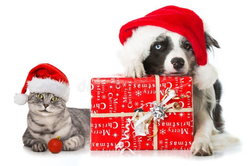 Gato e cão do Natal imagem de stock