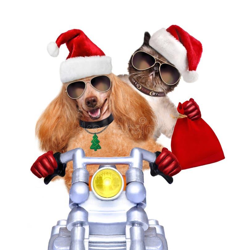 Gato e cão em chapéus vermelhos do Natal fotografia de stock