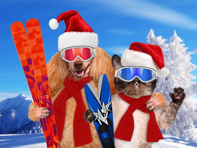Gato e cão em chapéus vermelhos do Natal com esquis imagem de stock