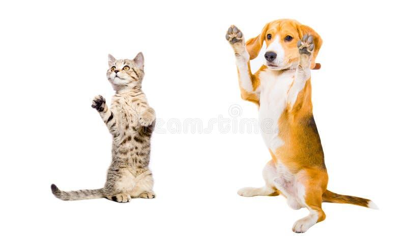 Gato e cão junto imagem de stock royalty free