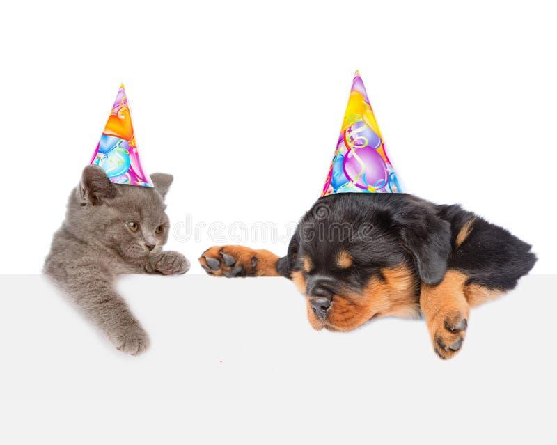 Gato e cão nos chapéus do aniversário que espreitam do gabinete vazio de trás da placa fotografia de stock royalty free