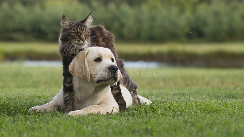 Gato e cachorrinho fotografia de stock