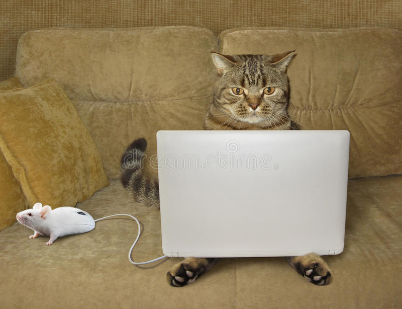 Gato e caderno fotografia de stock royalty free