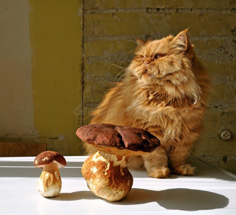 Gato e cogumelos fotos de stock