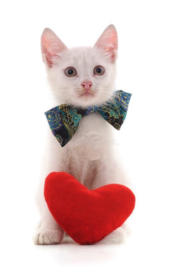 Gato e coração vermelho imagem de stock royalty free