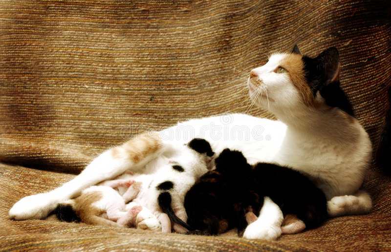 Gato e crianças da matriz fotografia de stock